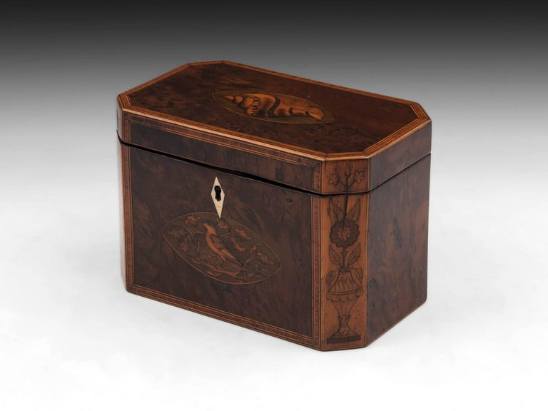 British Georgian Antique Burr Yew Conch Shell Tea Caddy, 18th Century For Sale