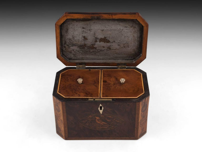 Georgian Antique Burr Yew Conch Shell Tea Caddy, 18th Century For Sale 1