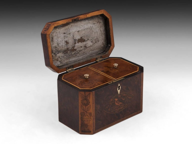 Georgian Antique Burr Yew Conch Shell Tea Caddy, 18th Century For Sale 2