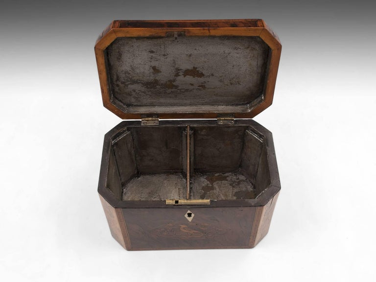 Georgian Antique Burr Yew Conch Shell Tea Caddy, 18th Century For Sale 4