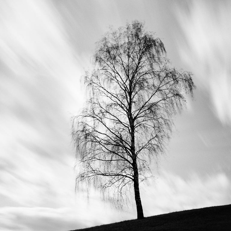 Black Birch, Austria - Black and White long exposure fine art film photography - Photograph by Gerald Berghammer, Ina Forstinger