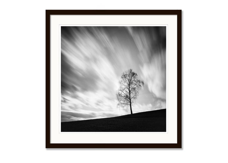 Black Birch, Austria - Black and White long exposure fine art film photography 5
