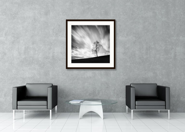 Black Birch, Austria - Black and White long exposure fine art film photography For Sale 1