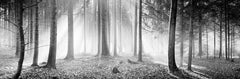 Enchanted Forest, Austria, black and white photography, sunny, foggy, landscapes