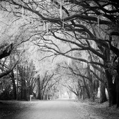 Fairytale Forest, Florida, USA - Black and White fine art film photography