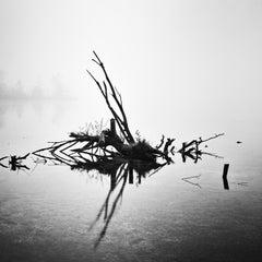Fallen Tree, Almsee, Austria, black and white photography, fine art landscapes