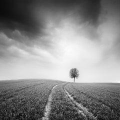 Farmland, single tree Austria, minimalis black and white photography, landscapes
