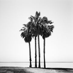 Four Palms, Beach, Venice Beach, California USA, black and white photography