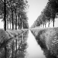 Gracht, Tree Avenue,  Netherlands, black and white photography, landscape