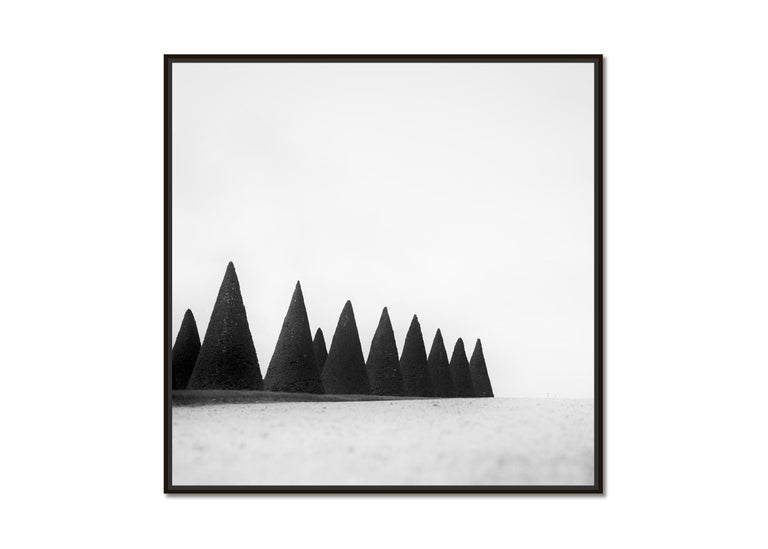 Hedges, Paris, Versailles, Yvelines, black and white art photography, landscapes - Photograph by Gerald Berghammer, Ina Forstinger