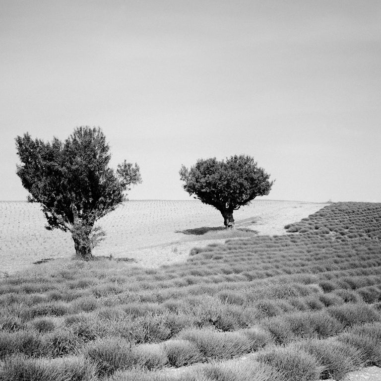 Lavender Field Study 3, France - Black and White fine art landscapes photography For Sale 1