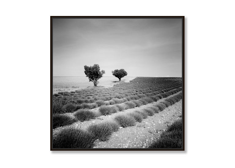 Lavender Field Study 3, France - Black and White fine art landscapes photography For Sale 2