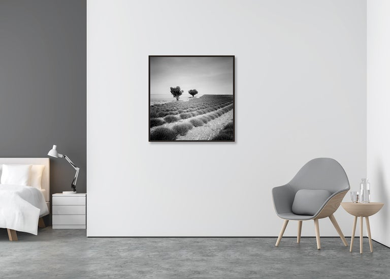 Lavender Field Study 3, France - Black and White fine art landscapes photography - Gray Landscape Photograph by Gerald Berghammer, Ina Forstinger