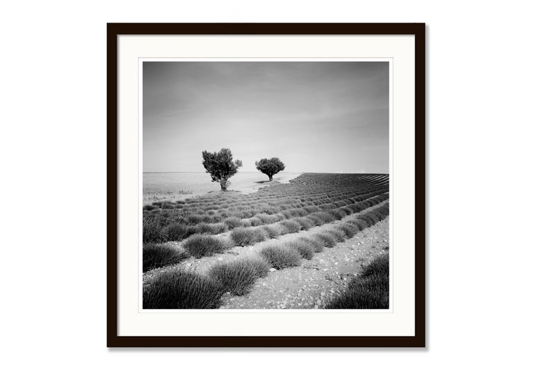 Lavender Field Study 3, France - Black and White fine art landscapes photography For Sale 4