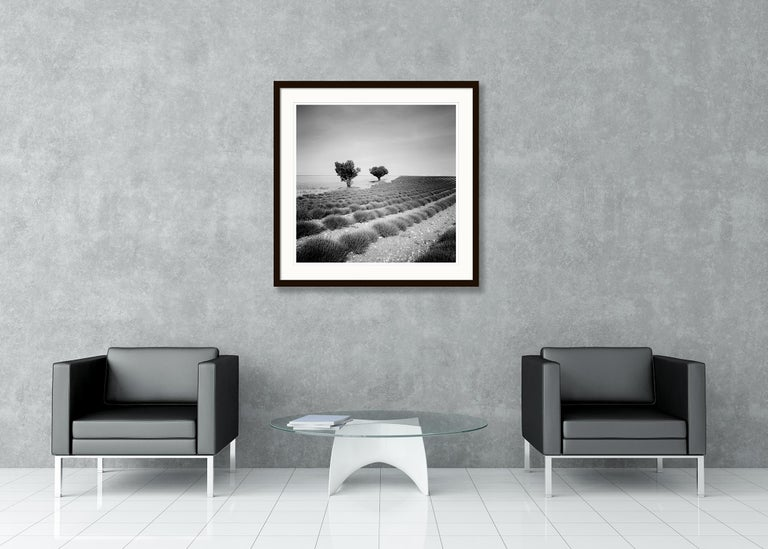 Lavender Field Study 3, France - Black and White fine art landscapes photography For Sale 5