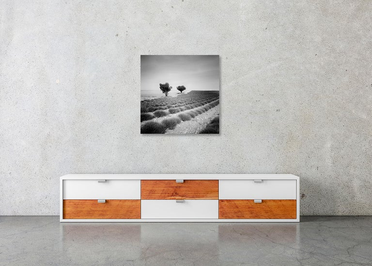 Lavender Field Study 3, France - Black and White fine art landscapes photography For Sale 6