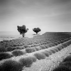 Lavender Field Study 3, France - Black and White fine art landscapes photography