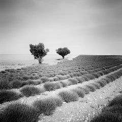Lavender Field with Trees, France, minimalist black and white art landscape