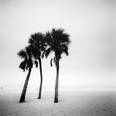 Palm Trees, Beach, Florida, minimalist black and white photography, landscape