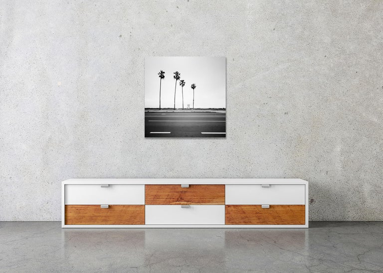 Palm Tree, Beach, Santa Barbara, USA, black and white photography, landscapes For Sale 2