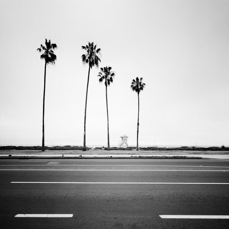 Gerald Berghammer, Ina Forstinger Black and White Photograph - Palm Tree, Beach, Santa Barbara, USA, black and white photography, landscapes