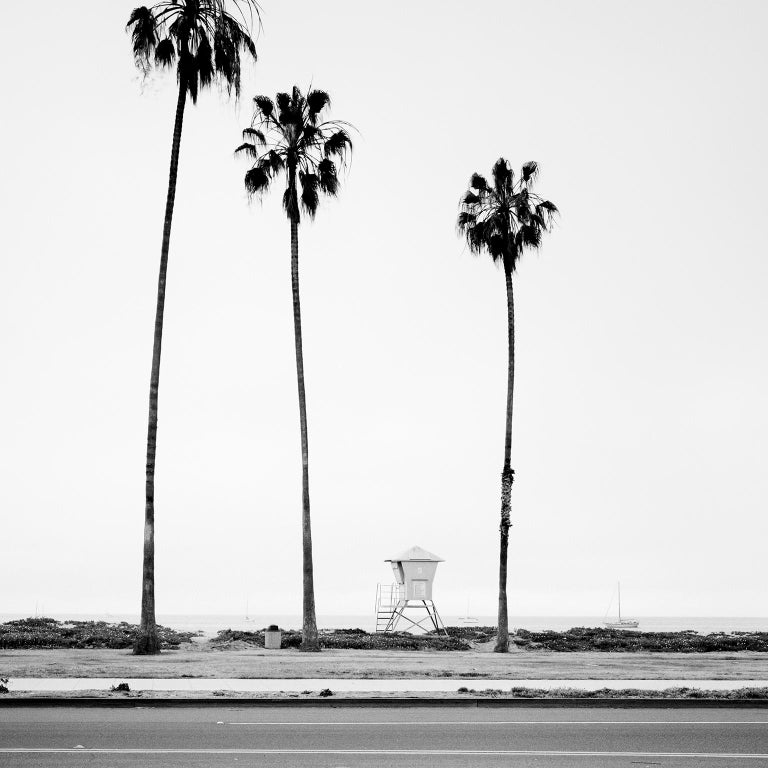 Palm Tree Study 3, Santa Barbara, USA - Black and White fine art photography - Photograph by Gerald Berghammer, Ina Forstinger