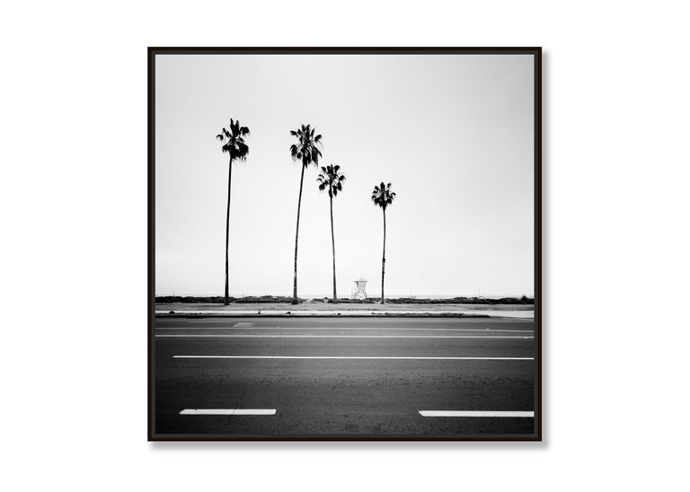 Palm Tree Study 3, Santa Barbara, USA - Black and White fine art photography - Contemporary Photograph by Gerald Berghammer, Ina Forstinger