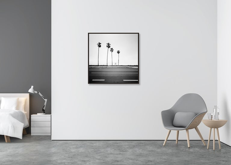 Palm Tree Study 3, Santa Barbara, USA - Black and White fine art photography - Gray Landscape Photograph by Gerald Berghammer, Ina Forstinger
