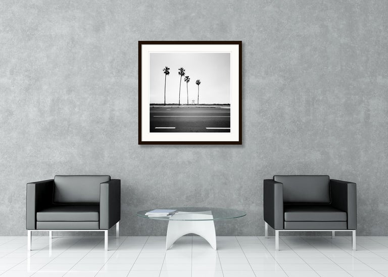 Palm Tree Study 3, Santa Barbara, USA - Black and White fine art photography For Sale 1