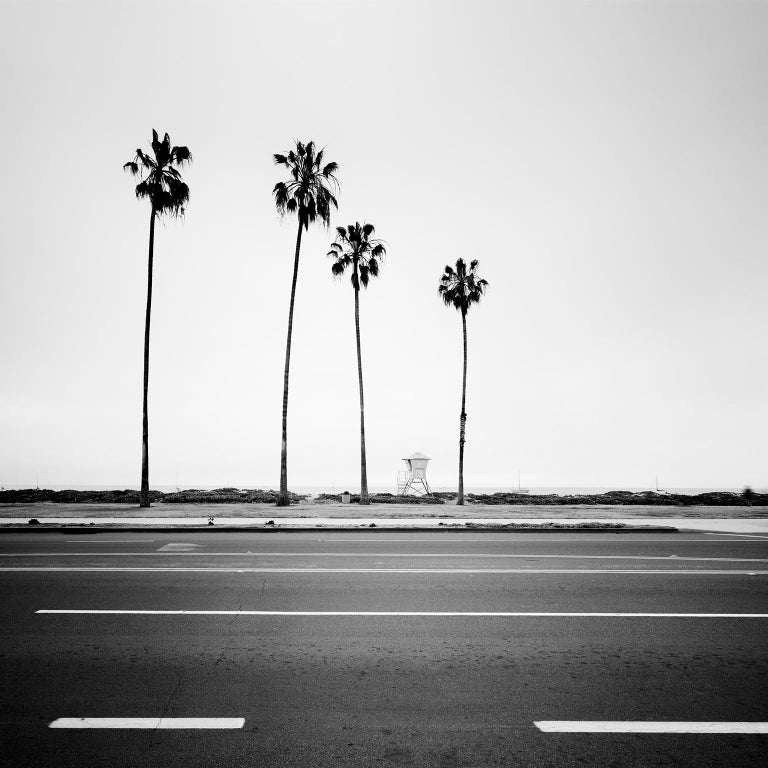 Gerald Berghammer, Ina Forstinger Landscape Photograph - Palm Tree Study 3, Santa Barbara, USA - Black and White fine art photography