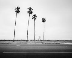 Palm Tree, Beach, Santa Barbara, USA, black and white photography, landscape