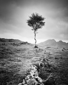 Strong Birch, Isle of Skye, Scotland, black and white photography, landscapes