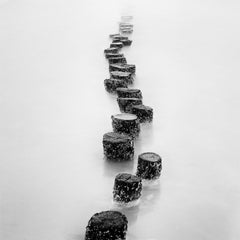 Wooden Pegs, Netherlands, contemporary black and white landscape photography