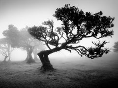 Ancient Laurisilva Forest, Portugal, Black and White art photography, landscape