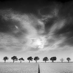Cherry Trees and Dark Sky, Austria, black and white art photography landscapes