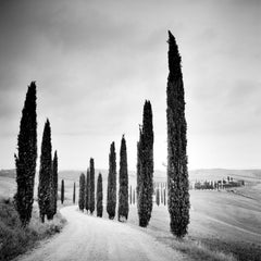 Cypress Trees along the Road, Tuscany, Italy, black and white landscape images