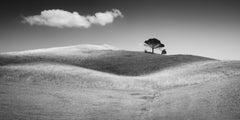 Italian Stone Pines, Tuscany, Italy, black and white art photography, landscape