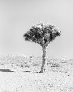 Joshua Tree, California, USA, black and white fine art photography, landscape
