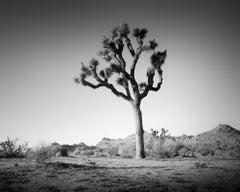 Joshua Tree in Mojave Desert, California, black and white photography, landscape