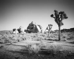Joshua Trees and Rocks, California, USA, black and white photography, landscape
