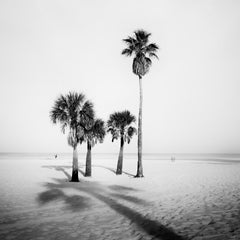 Palm Trees, beach, Florida, USA, black and white fine art photography, landscape