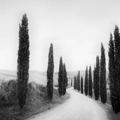 Path lined with Cypress Trees, Tuscany, Italy, black and white landscape images