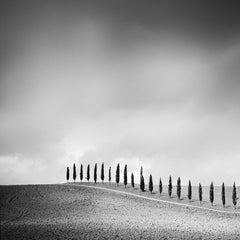 Row of Cypress Trees, Tuscany, Italy, black and white photography, landscape
