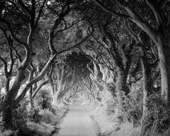 The Dark Hedges, Tree Avenue, Ireland, black and white photography, landscape