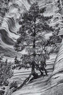 Slot Canyon Tree, NM 1/5