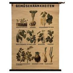 German Educational Vegetable Botanical Roll-Up Chart
