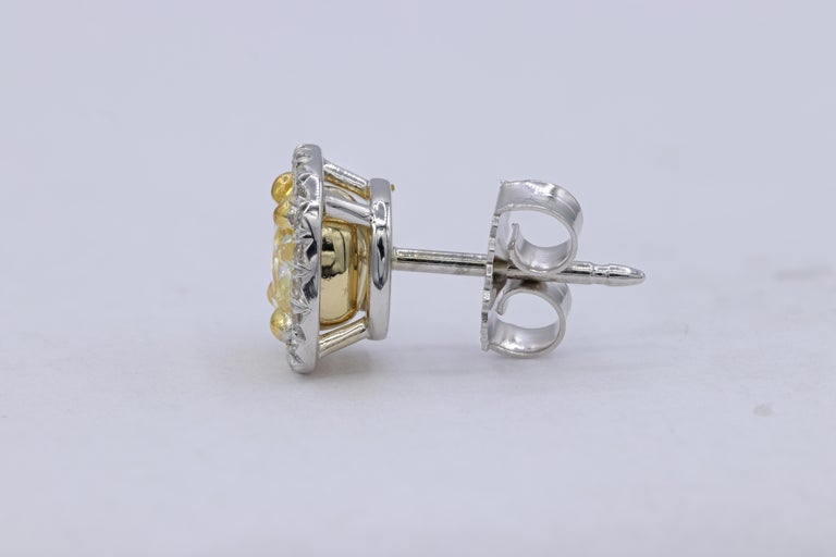 18K White gold Fancy Yellow diamond stud earrings with two GIA Certified Cushion Cut Diamonds.  - Center diamonds totaling 2.10 Carats Fancy  Yellow Cushion Cut Diamonds, VVS1 AND VS2 in Clarity  - GIA#1192256937; 1192264192 - Diamonds around