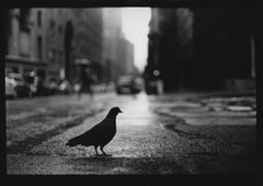 Untitled #15 (Pigeon Grand Central) from New York - Black and White Photography