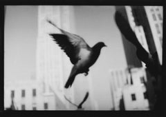 Untitled #23 (Pigeon NY Landscape) from New York - Black and White Photography