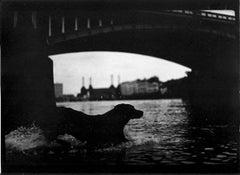 Untitled #25 (Dog Battersea Bridge) from Eternal London - Giacomo Brunelli